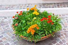Multicolored flowerbed on a street Stock Photos
