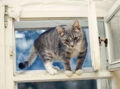 Young cat standing on an open old ventilator window Stock Photos