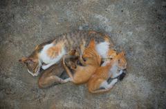 Cat with kittens Kuvituskuvat