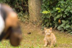 Dog versus cat. A beautiful moment with a cat waiting for dog next moves. - stock photo