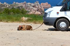 Recreational vehicle and a dog - stock photo