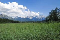 Stock Photo of Reed at a lake Barmsee in the Karwendel mountains