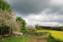 Rape filed and flowering trees in Bavaria - stock photo