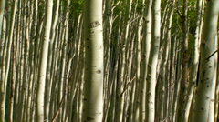 Bamboos in forest Stock Footage