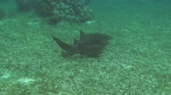 Fishes swimming over seabed - stock footage