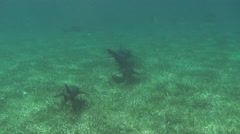 Stock Video Footage of Sharks swimming over seabed