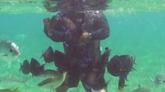 Diver feeding fishes underwater Stock Footage