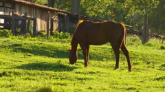 Horses grazing in field Stock Footage