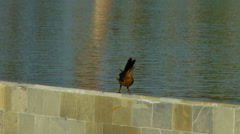 Bird perching on side wall Stock Footage