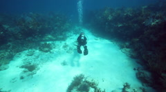 Diver swimming over seabed - stock footage