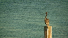 Heron perching on wooden post Stock Footage