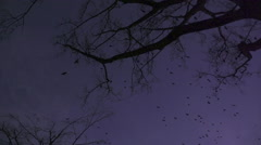 Black birds against purple sky Stock Footage