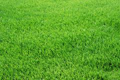 Perfect cut green grass Stock Photos