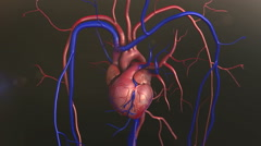 Human Heart Anatomy Stock Footage