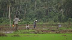 The peasants in the field. Asia. Sri Lanka - stock footage