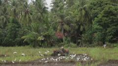 A man works on a tractor in a muddy field. Asia. Sri Lanka Stock Footage