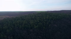 Aerial view of pine forest Stock Footage