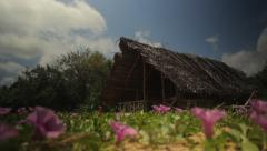 Lonely hut of reeds among the tropical field of flowers. Sri Lanka Stock Footage
