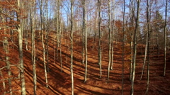 Autumn forrest, dolly from top to the bottom - stock footage