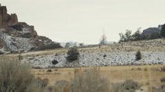 Bighorns through Mountain Sage Stock Footage