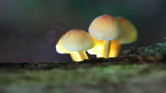 Fungal spores Stock Footage