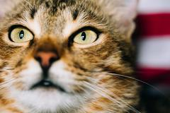 Close Up Portrait Peaceful Tabby Kitten Cat Stock Photos