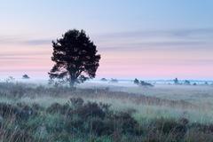 tree on marsh during misty morning - stock photo