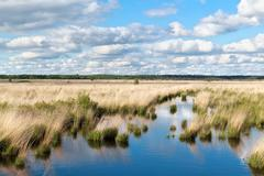 blue sky over swamp water - stock photo