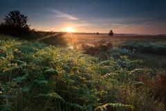 misty sunrise on swamp with fern - stock photo