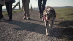 seniors taking dog for a walk - stock footage
