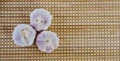 closeup three cloves garlic - stock photo