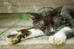 Motley cat - stock photo