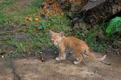 young red kitten - stock photo