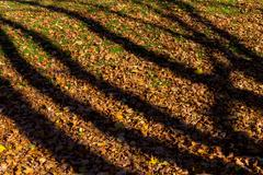 Shadows from trees on fallen autumn leaves Stock Photos