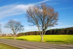 Country road and trees along a rape field - stock photo
