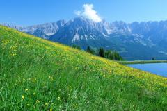 Flower meadow in the Wilder Kaiser region of Austria Stock Photos