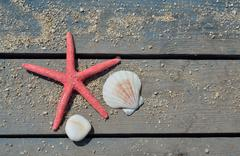Red sea star, shell and stone - stock photo