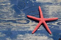 Red sea star on beach bench - stock photo