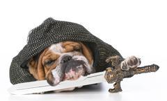 guard dog knight - stock photo