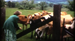 Vintage ,1952 Farm Girl with cows Stock Footage
