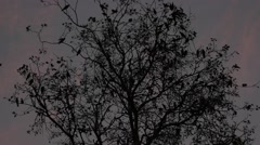 Dark tree with birds on it on the sky background in the style of Hitchcock Stock Footage