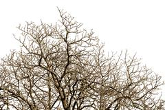 Leafless tree against a cloudless sky Stock Photos