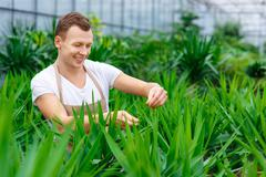 Joyous male florist is busy working Stock Photos