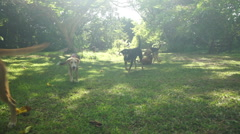 dogs playing in garden - stock footage