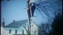 2850 man climbs down from tree on ladder - vintage film home movie Stock Footage