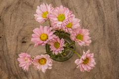 Pale pink flowers on a wooden table Stock Photos