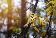 Autumn leaves with sun rays Stock Photos
