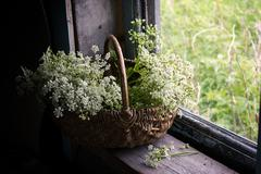 Still-life with a bunch of white wild flowers in a basket - stock photo