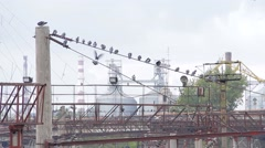 Many birds on wires - stock footage