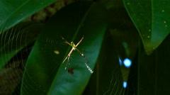 Spider sitting on spiderweb - stock footage